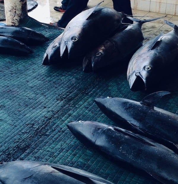 Fish landing | Mutrah fish market | seafood Oman | Muscat tour | Oman tourism