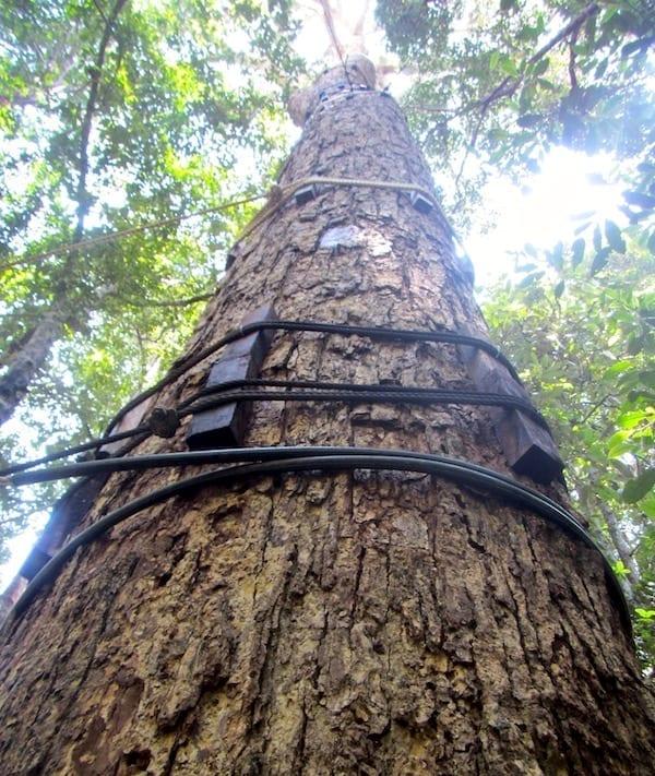 Canopy walkway | rainforest hiking | rainforest tree | Taman Negara National Park | Malaysian rainforest of Taman Negara | cuti-cuti Malaysia | Malaysia tourism | oldest rainforest | Teja on the Horizon blog